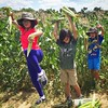 Children of the corn.