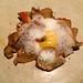 Lobster mushrooms with foam, egg yolk, quinoa and winter savoury