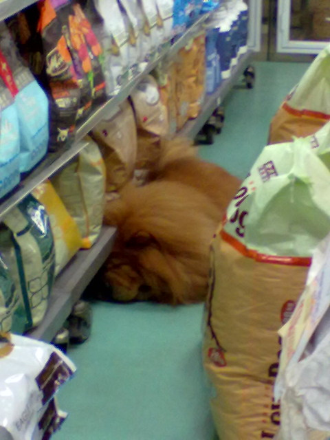 'Lion' at pet shop