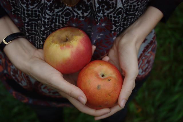 Gâteau pomme noisettes ricotta