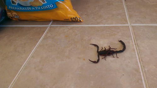 Scorpion in Mexico