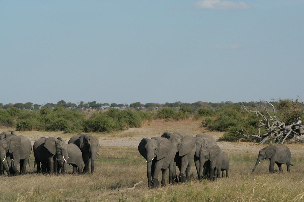 Visit Botswana