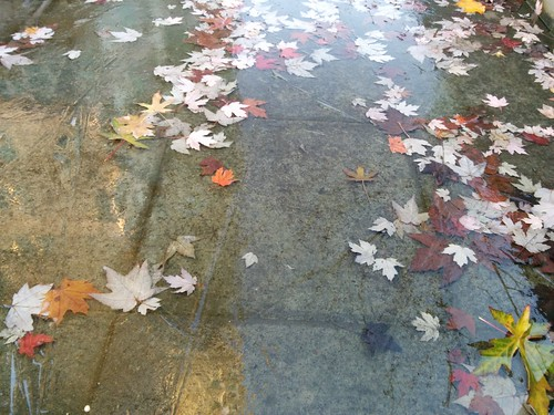 Leaves in a frozen puddle