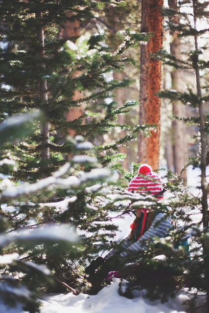 tree hunt // the little red house blog