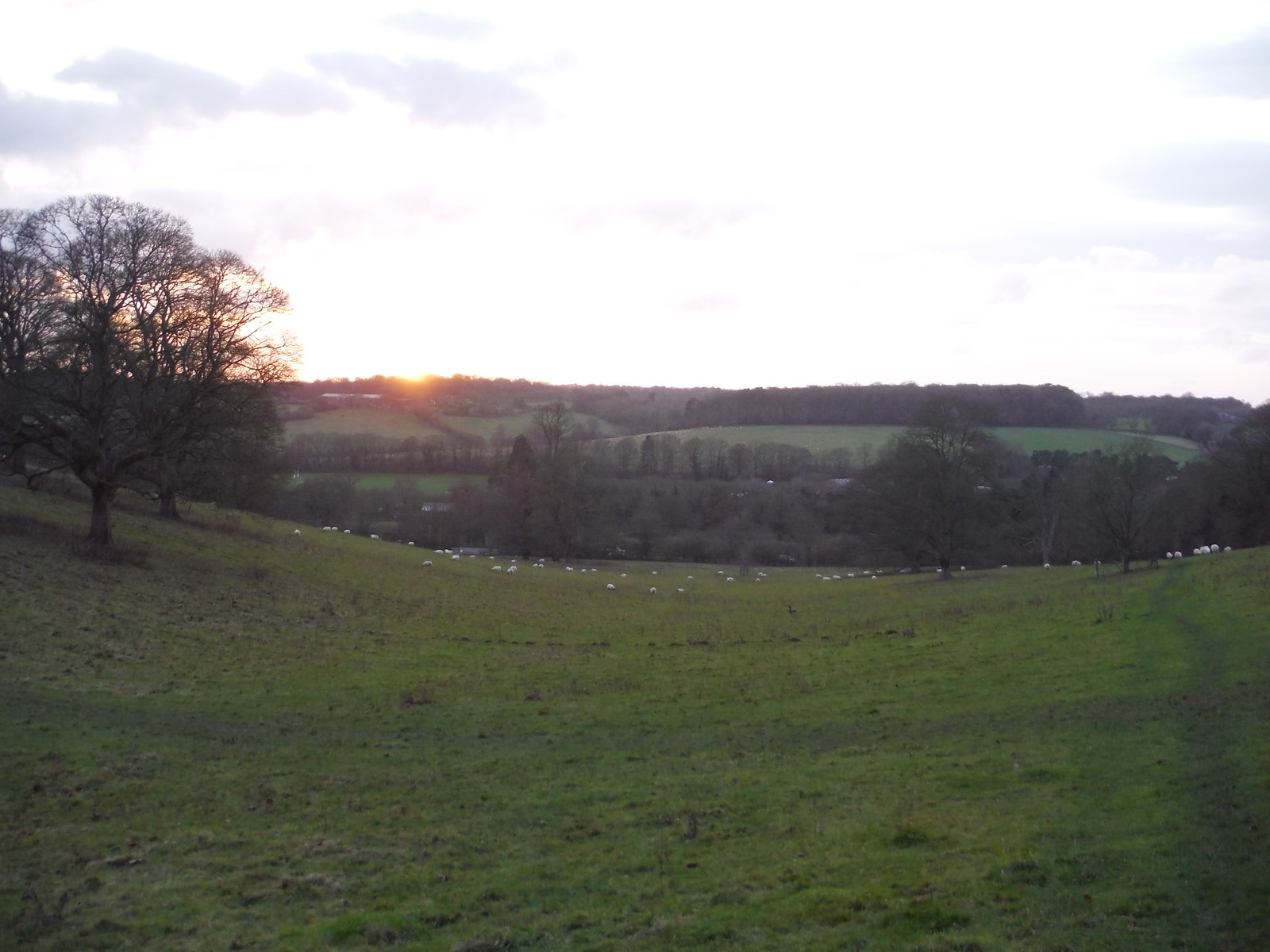 Sunset Chalkdell Wood, Great Missenden SWC Walk 140a Wendover to Great Missenden