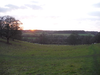 Sunset Chalkdell Wood, Great Missenden