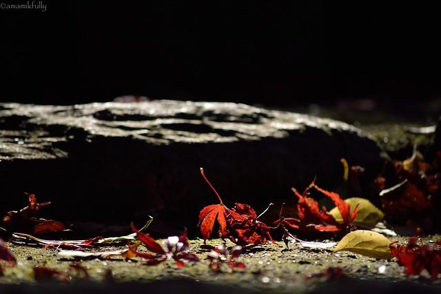 落ちた紅葉