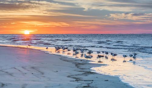 sunrise frippisland bird huntingisland g thisisexcellent