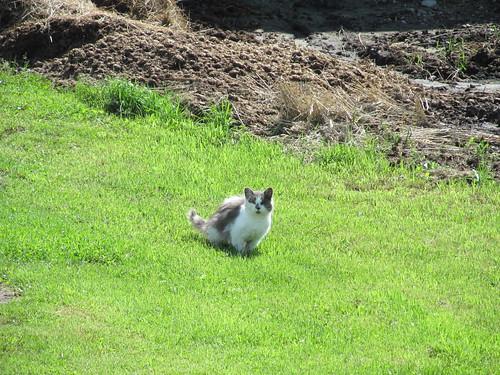 ontario canada cat mammal thenation caledoniasprings unitedcountiesofprescottandrussell prescottandrussellrecreationaltrail