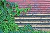 Viney Door by graphicsgirl925