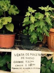 Shiso supply - Mexico City