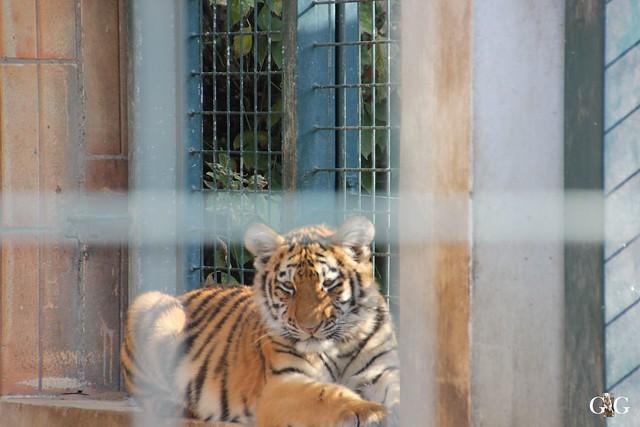 Sonntags-Besuch im Tierpark Friedrichsfelde 04.10.201536