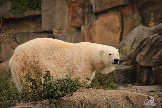 Zoo Berlin 18.09.2015   018