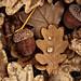 grunged oak by JossieK