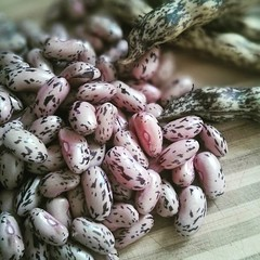 Cranberry beans have arrived at the farmers market! Pasta e fagioli is on the menu this week.