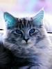 On blue eyes