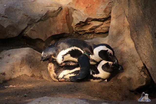 Zoo Berlin 08.11.2015  034