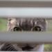 Peeking in by sltaylor