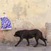 street scene in Arles by Werner Schnell Images (2.stream)