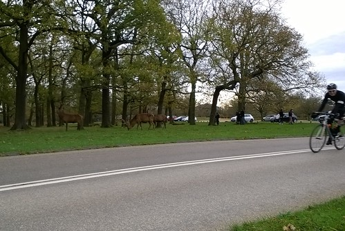 Deer don't cycle
