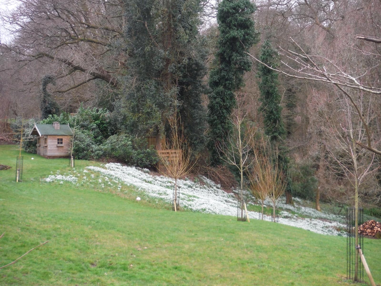 Smallbrook Barn (Snowdrops in Garden) SWC Walk 144 Haslemere to Farnham