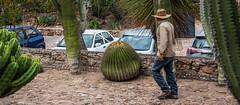 2016 - Mexico - Cadereyta de Montes - Regional Botanical Garden - 6 of 8