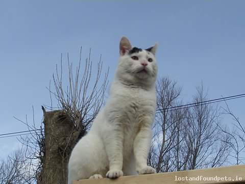 Mon, Feb 27th, 2017 Lost Male Cat - Clonard, Anneville, Meath