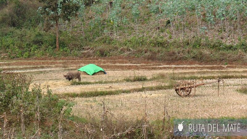 Hsipaw Pankam Myanmar (5)