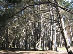 Nice Grove