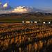 Wheat fields by lyzadanger