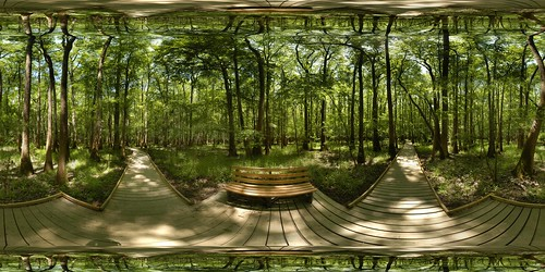 park autostitch panorama monument forest geotagged nationalpark pano 360 national sphere swamp boardwalk hardwood congaree equirectangular 180x360 geolat33822448057752 geolon80826088142397