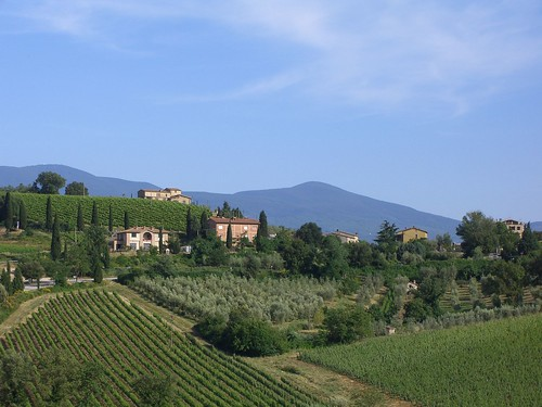 Vineyards of Chianti region