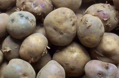 plant(0.0), fruit(0.0), vegetable(1.0), potato(1.0), produce(1.0), food(1.0), root vegetable(1.0), tuber(1.0),
