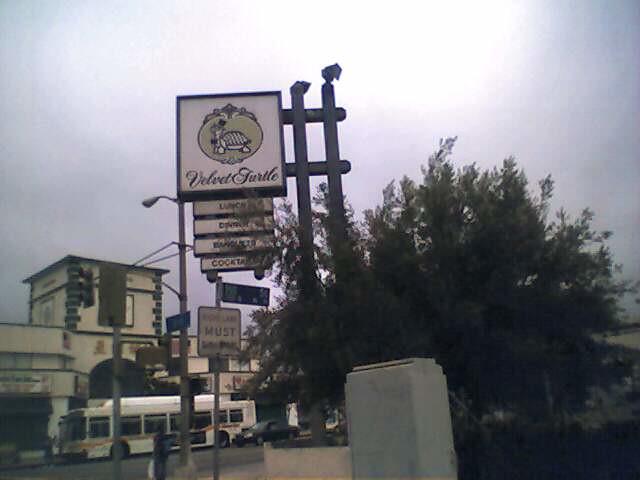 Velvet Turtle Restaurant Sunnyvale Ca