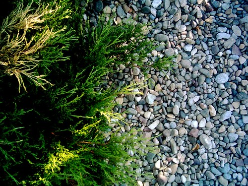 Shrub and Gravel