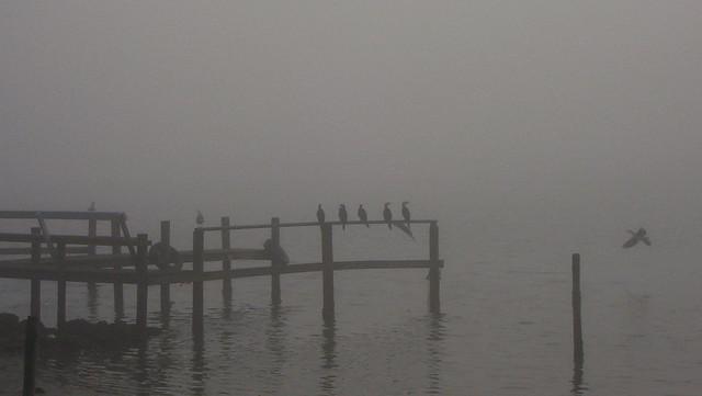 Sea Mist 7-8-06