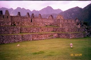 Llamas (Maybe Alpacas), Machu Picchu