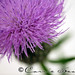 PhotoFri - PURPLE