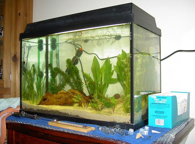 Fish tank now with mopani wood flickr photo sharing for Fish tank wood