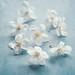 More blossom by borealnz