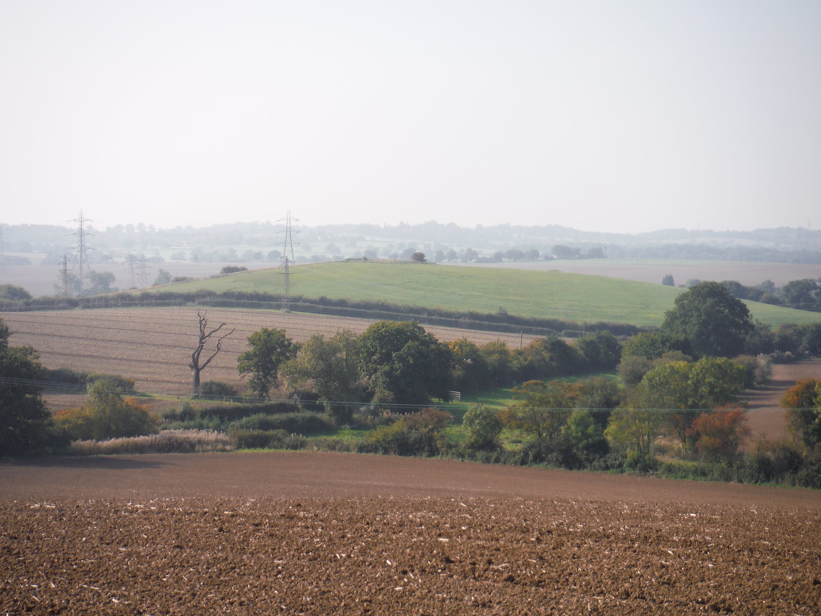 Rolling Landscape near South Woodham Ferrers and yes: Pylons SWC Walk 159 South Woodham Ferrers to North Fambridge