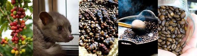 Kopi Luwak (Loewak koffie)