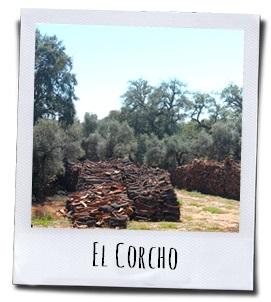 De kurkeiken in de Sierra de Aracena y Picos de Aroche leveren een speciaal product