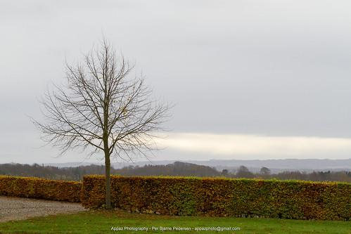 denmark jylland natur nature plants ry tree trees træer farm farmliving appazphotography