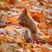 I like hazelnuts by hedera.baltica