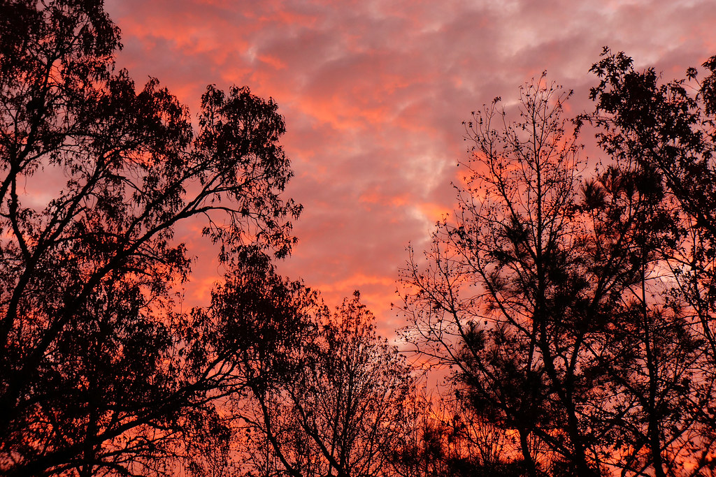 November Sunrise 2