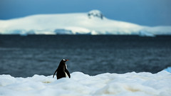 ANTARCTICA // preview from my journey