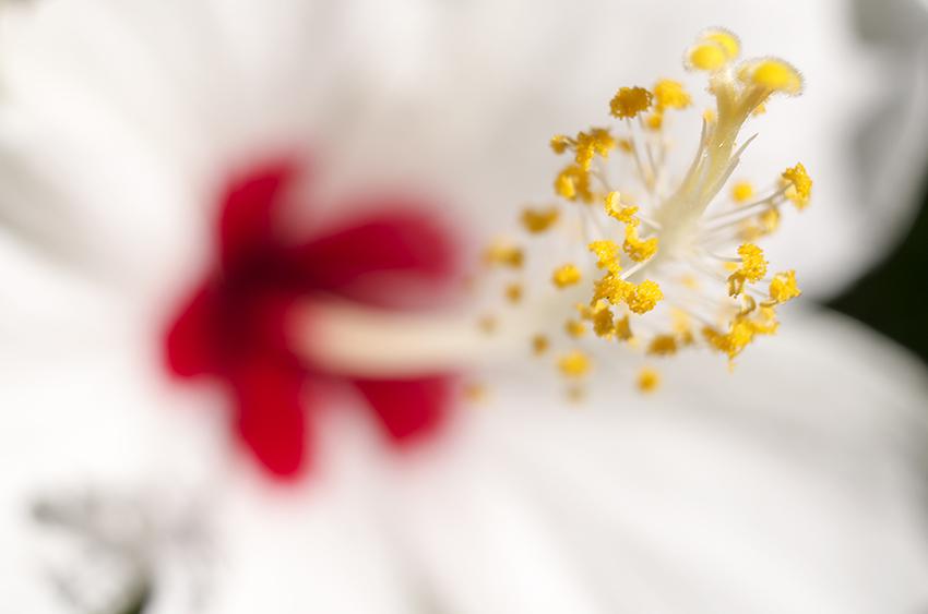 花草蟲三要素