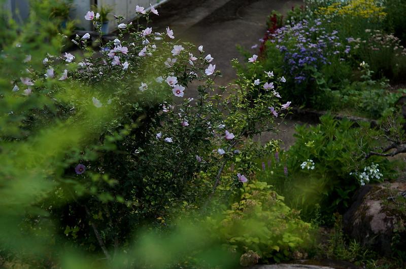 秘密の花園_201508