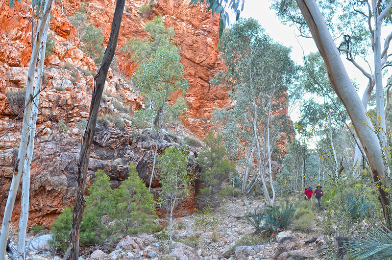 Spencer Gorge - Larapinta Trail